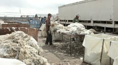 Sheep wool sort quality control table P HD 9678 Stock Footage
