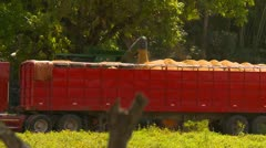 Agriculture, grain pumped into grain truck from combine medium shot Stock Footage