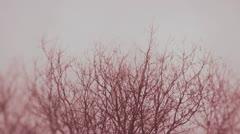copa arbol color - stock footage
