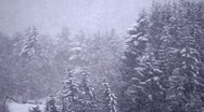 Seamless loop of heavy snow falling against trees in background Stock Footage