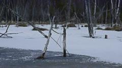 Stock video footage Frozen swamp Stock Footage