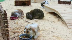 Stock Video Footage of rabbits