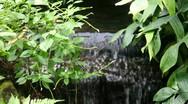 Stock Video Footage of Spring stream