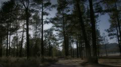Forest view 7 Stock Footage