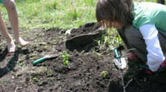 Children watering young little raspberrycane plants together Stock Footage