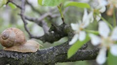 Snail in a orchard Stock Footage