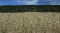 Spain Castile wheat and hills 1 - stock footage