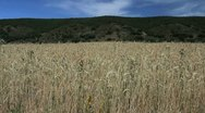 Stock Video Footage of Spain Castile wheat and hills 1