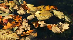 Autumn leaves floating on the water Stock Footage