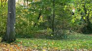 Leaf fall in autumn forest Stock Footage