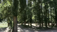 Spain Castile Rio Duraton park trees 1 - stock footage