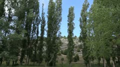 Spain Castile poplar trees Stock Footage