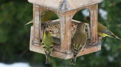 Bird feeder Stock Footage