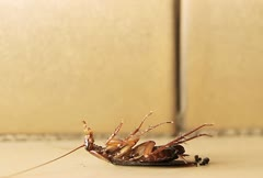 Cockroach On Floor Dying Stock Footage