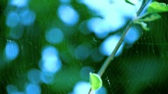 Spiderweb swings in the wind Stock Footage