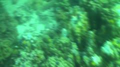 Pond5 172 Stock Footage