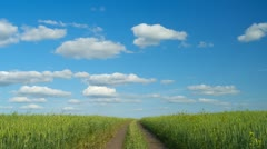 Dirt road in the green wheat field, summer day, timelapse. - stock footage