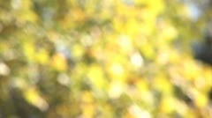 Yellow Leaves Soft Focus 1 Stock Footage