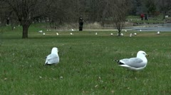 Seagull In Park Stock Footage
