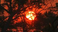 Stock Video Footage of Sunsets sundown as the sun slowly disappears behind jungle trees 2039