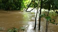 Flooded rainforest near a rising river Stock Footage