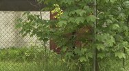Soldiers leaving building behind fence Stock Footage