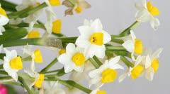 Daffodil flowers Stock Footage