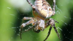 Spider and prey Stock Footage