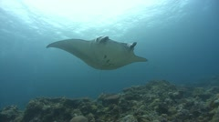 Manta Ray over corals Stock Footage