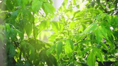 Green leaves under rain in sun shine Stock Footage