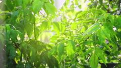 Vihreät lehdet alla sade aurinko paistaa Arkistovideo