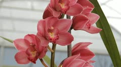 Orchids Stock Footage