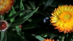 flower - stock footage