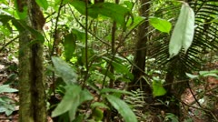 Interior of tropical rainforest beside a creek, pan Stock Footage