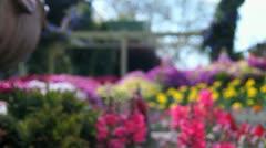 Floral garden Stock Footage