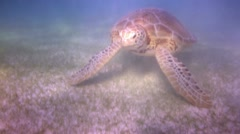 Loggerhead turtle underwater mexico Stock Footage