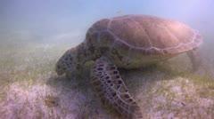 Loggerhead turtle underwater mexico Stock Footage