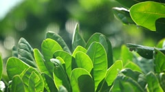 Green leaves in the wind Stock Footage