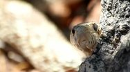 Stock Video Footage of Snake Peek-A-Boo