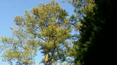 Stock Video Footage of Trees on a Sunny Day