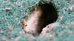 Macro - ant hole emergence Stock Footage