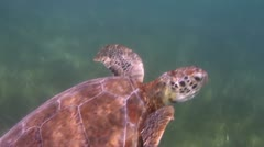Loggerhead turtle filmed underwater in mexico Stock Footage