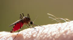Mosquito Sucking Blood Stock Footage