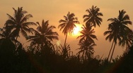 Sunrise in the jungle timelapse Stock Footage