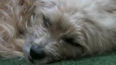 Dog wakes up Stock Footage