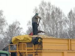 Granulate branch wood man Stock Footage
