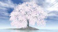 Cherry tree on island Stock Footage