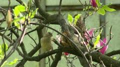 Sparrows Stock Footage