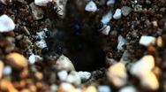 Stock Video Footage of Black ants in their anthill