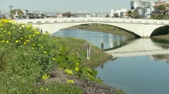 Daisy field and a bridge over water. Stock Footage